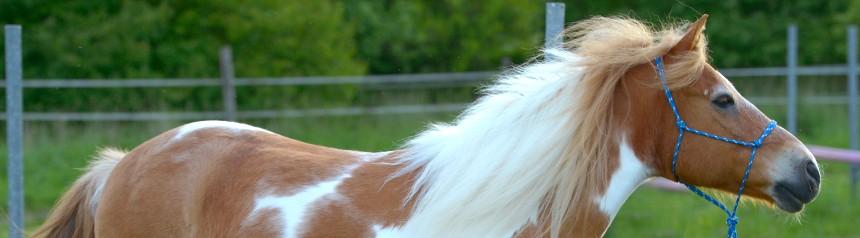 Profilaufnahme Pferd Milan