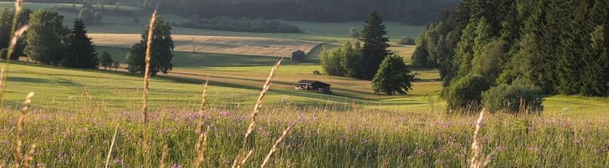 Landschaftsbild mit Grashalmen im Vordergrund