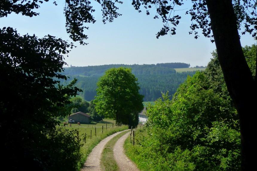 Feldweg durch Wald und Wiese