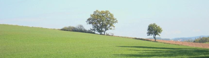 Ein begrünter Hang mit zwei Bäumen