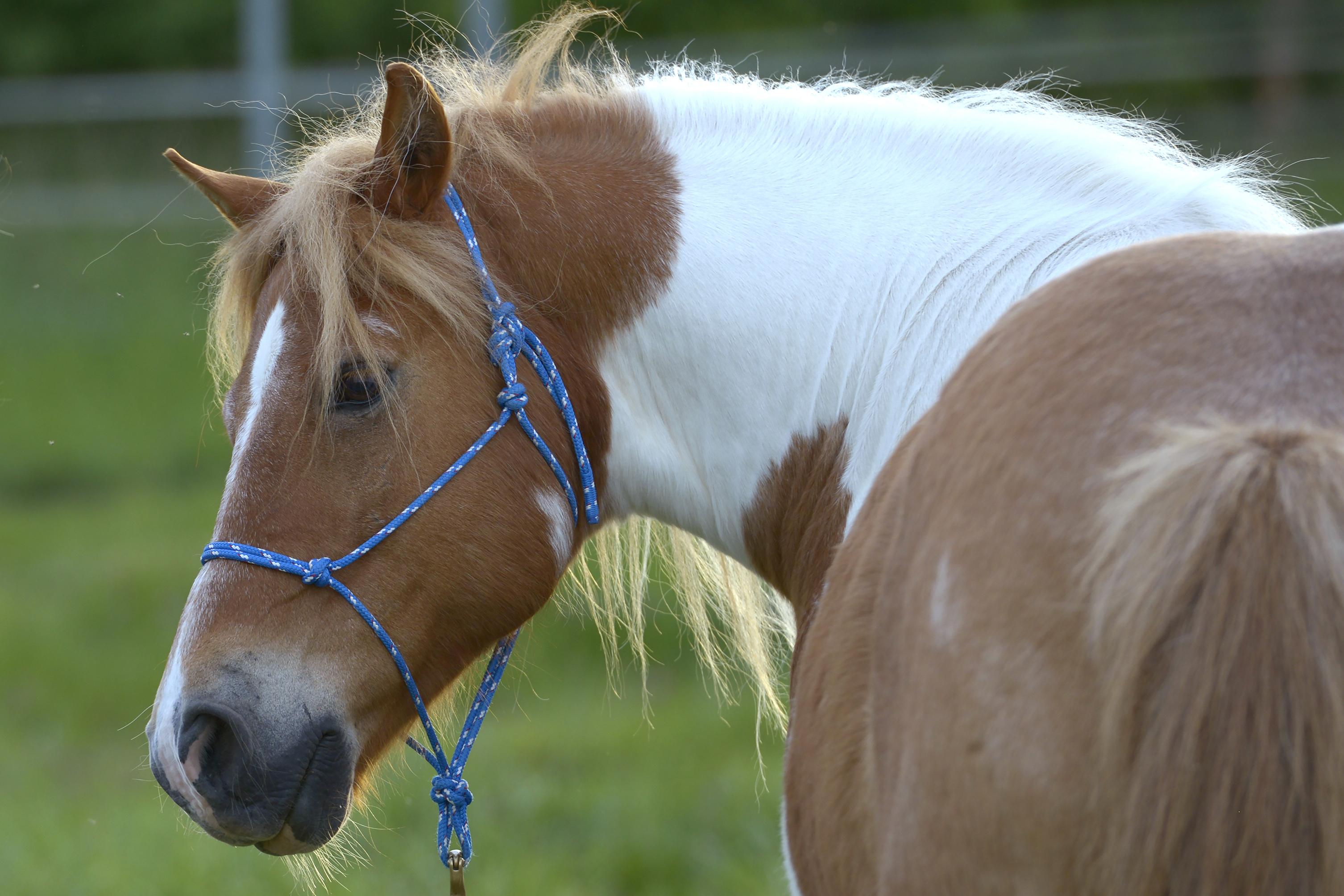 ich w nsch mir ein pony vortrag mit gespr chsrunde achtsames reiten regensburg. Black Bedroom Furniture Sets. Home Design Ideas
