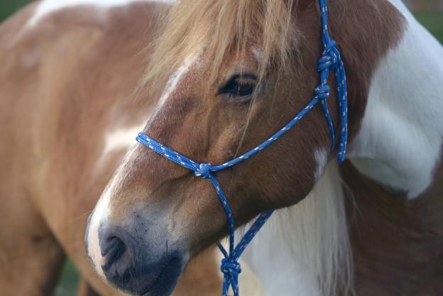 Pferd mit Schnurhalfter