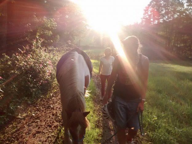 Pferdebegleitung